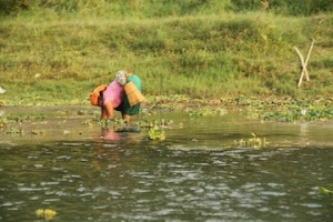 The ladies of chitwan work so hard. One is digging for snails in the riverbed, the others are carrying stalks for thatched roofs. They work all day and always smile.  Amazing